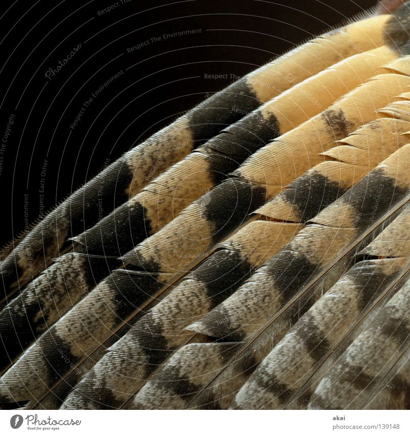 Beautiful Sky Animal Air Bird Fear Food Flying Feather Wing Concentrate Hunting Testing & Control Watchfulness To feed