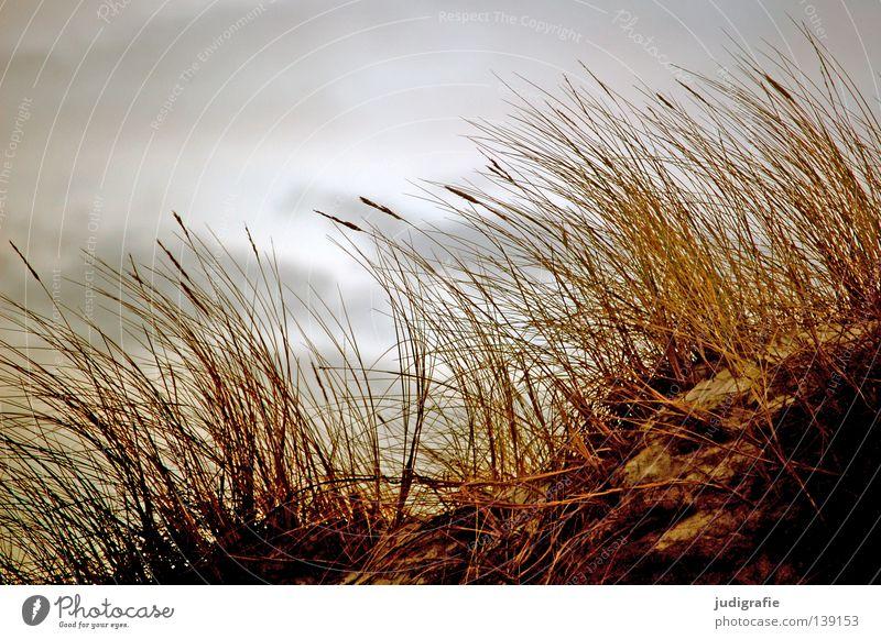 grass Grass Beach Coast Environment Clouds Bad weather Growth Plant Western Beach Darss Colour Sky Beach dune Sand Nature marram grass fischland-darß