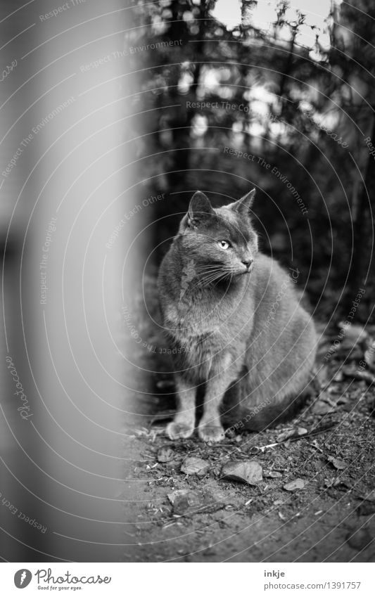Woodeye be watchful Autumn Garden Animal Pet Cat Domestic cat 1 Crouch Looking Eyes Lack Animal face One-eyed Observe Black & white photo Exterior shot Deserted