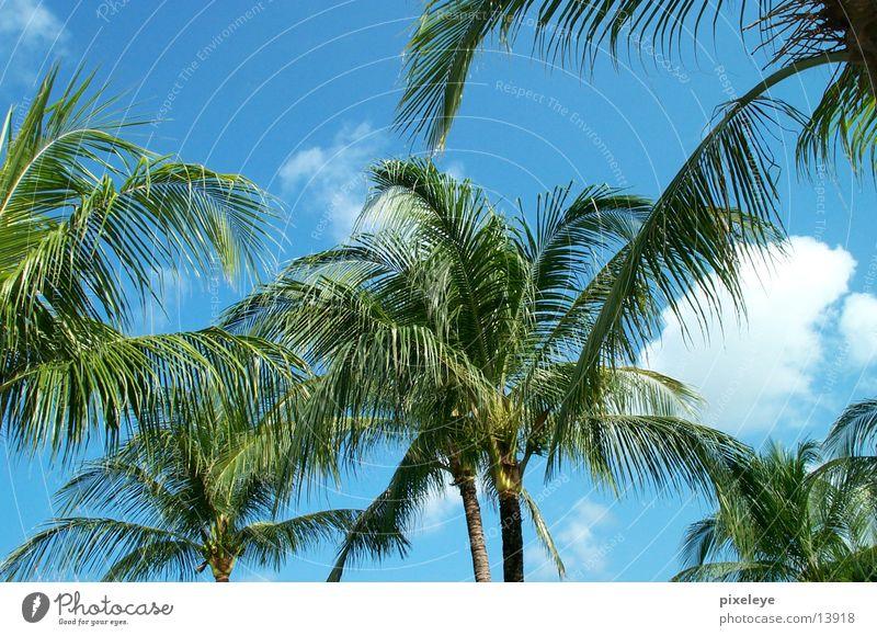 Sky Palm tree Bali