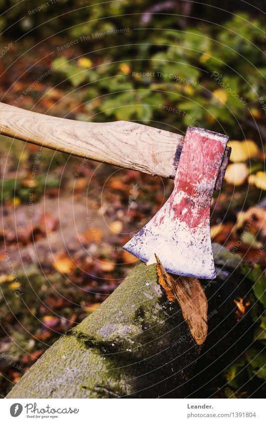Axe II Environment Garden Virgin forest Work and employment Make Esthetic Brown Green Red Forest Tree Cut down Autumn Wood Lumberjack Colour photo