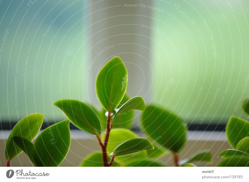 it greenens so greenly Window Depth of field Flower flower cutout green-white Nature in the living room flowerless