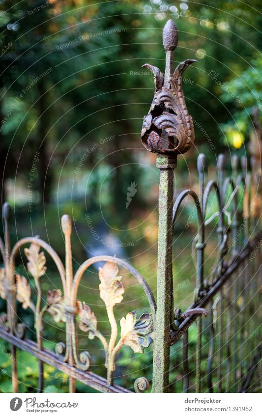 Nature Plant Summer Leaf Environment Sadness Blossom Death Garden Park Decoration Beautiful weather Grief Belief Fence Bud
