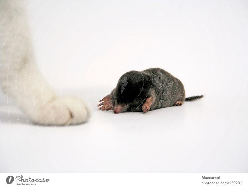Cat White Black Sadness Meadow Death Legs Lie Earth Wait Nose Grief Pelt Pain Bottle Mammal