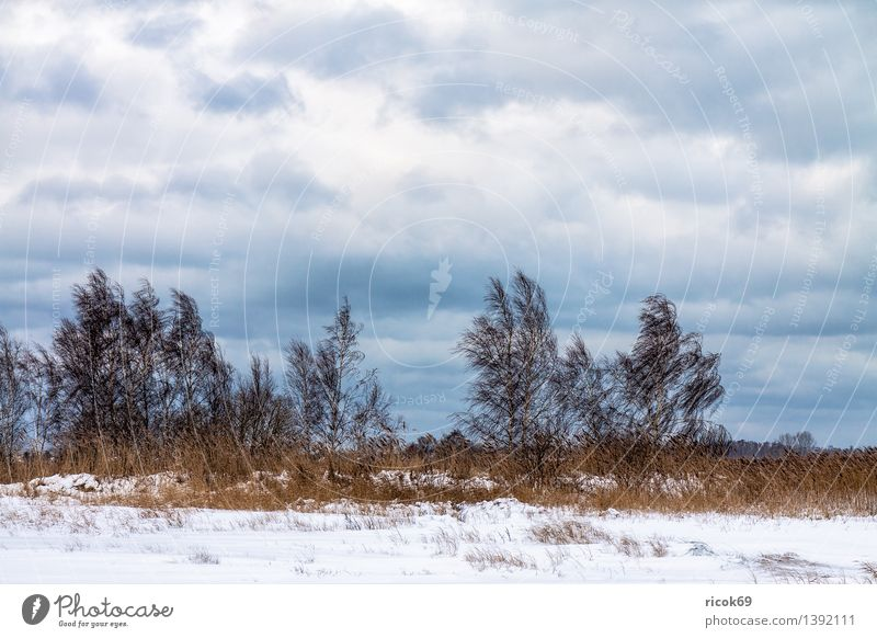 Trees in winter Vacation & Travel Winter Nature Landscape Clouds Climate Snow Coast Cold Calm Boddenlandscape NP Common Reed Mecklenburg-Western Pomerania Sky