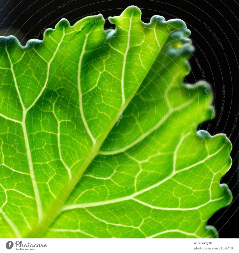Nature Green Beautiful Plant Leaf Black Life Dark Nutrition Environment Small Germany Large Design Fresh Multiple