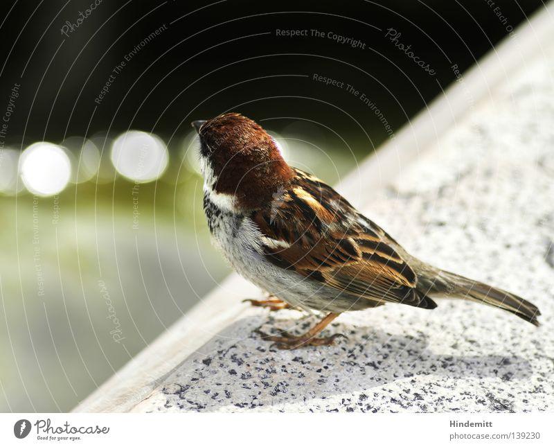 A bird in Lazise Water Green Calm Black Stone Lake Brown Bird Coast Food Gloomy Break Feather Stop Boredom