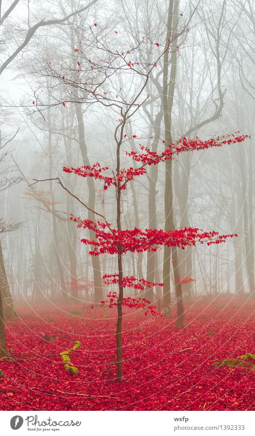 Magic forest in red and white Spring Autumn Fog Tree Leaf Forest Dream Red White Surrealism magic fantasy Enchanted forest Enchanted wood Mystic discoloured