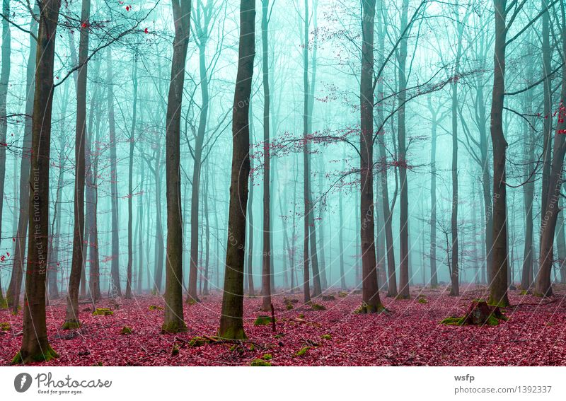 Tree Red Leaf Forest Autumn Spring Dream Fog Turquoise Surrealism Magic Enchanting Mystic Fantasy literature Enchanted forest Enchanted wood