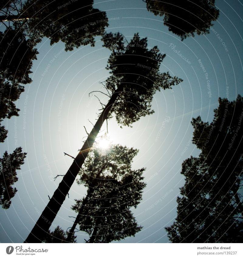 Sky Nature Green Beautiful Tree Plant Sun Leaf Animal Forest Yellow Relaxation Dark Graffiti Jump Bright