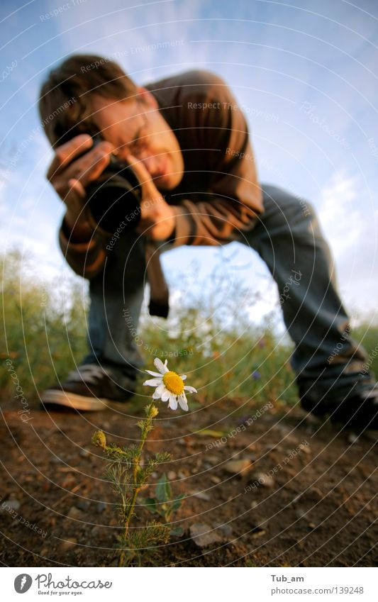 Flower Joy Loneliness Yellow Blossom Grass Photography Planning Growth Threat Daisy Stick Photographer Single