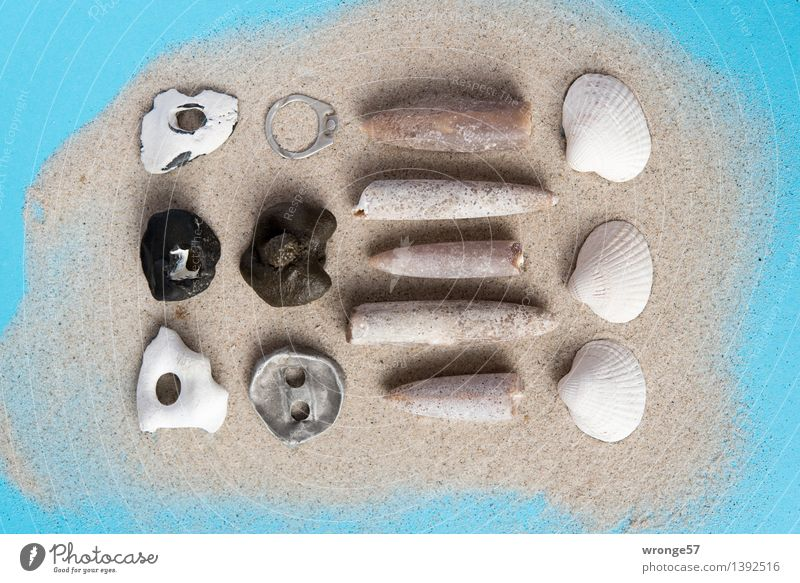 Collecting mania I Kitsch Odds and ends Souvenir Collection Collector's item Stone Sand Old Maritime Blue Gray Black White Still Life Mussel shell Fossil Metal