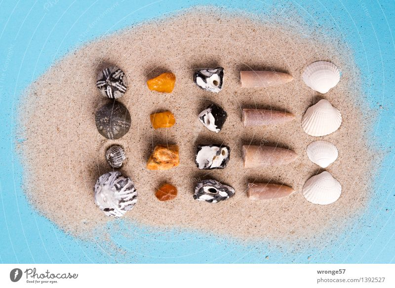 Blue White Black Stone Brown Sand Gold Kitsch Collection Still Life Mussel Maritime Souvenir Odds and ends Landscape format Amber