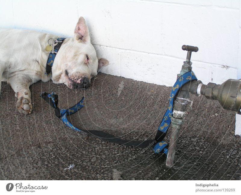 Freedom Dog Rope Mammal Australia Resign Animal Mastiff Hazard-free