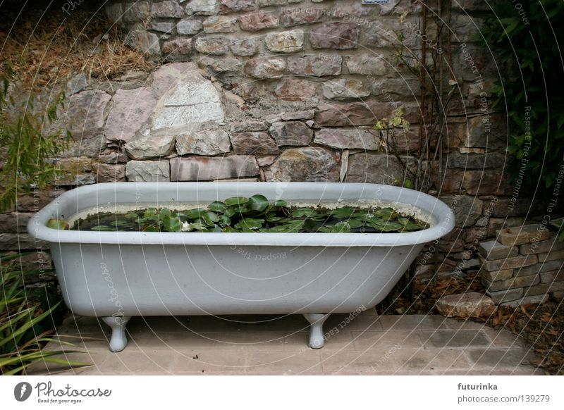 Water White Flower Plant Stone Grief Growth Furniture Distress Bathtub Lily