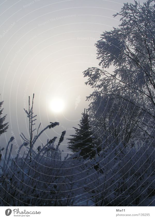 winter morning Winter Sunrise Hoar frost Cold Morning Tree Forest Ice Fog Snow Plant Frost