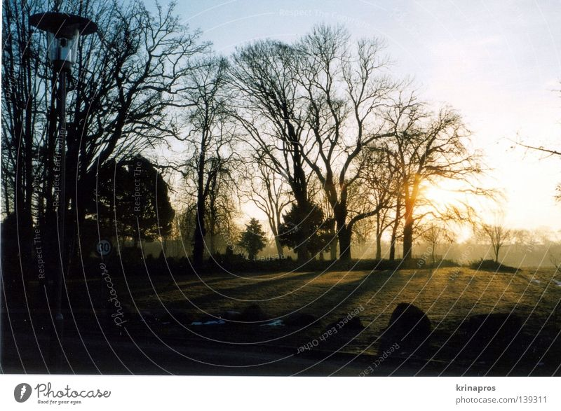 ...like nothing happened. Beautiful Sunlight Physics Grief Cemetery Loneliness Morning Dark Sunbeam Light Grave Tree Exterior shot Landscape Back-light Distress