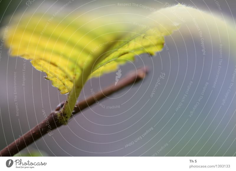 Nature Plant Blue Leaf Calm Yellow Autumn Movement Natural Gray Brown Elegant Authentic Esthetic Simple Uniqueness