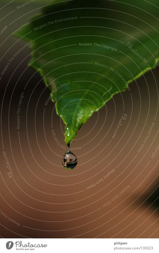 Nature Water Green Plant Leaf Autumn Rain Environment Wet Drops of water Drop To fall Damp Dew Wild plant