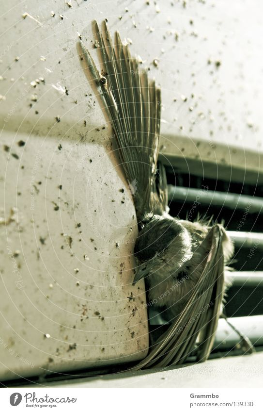 Death Sadness Bird Grief Wing Accident Beak Disaster Claw Sparrow Sacrifice Adversity Disastrous Tragic Metal grid Clamp