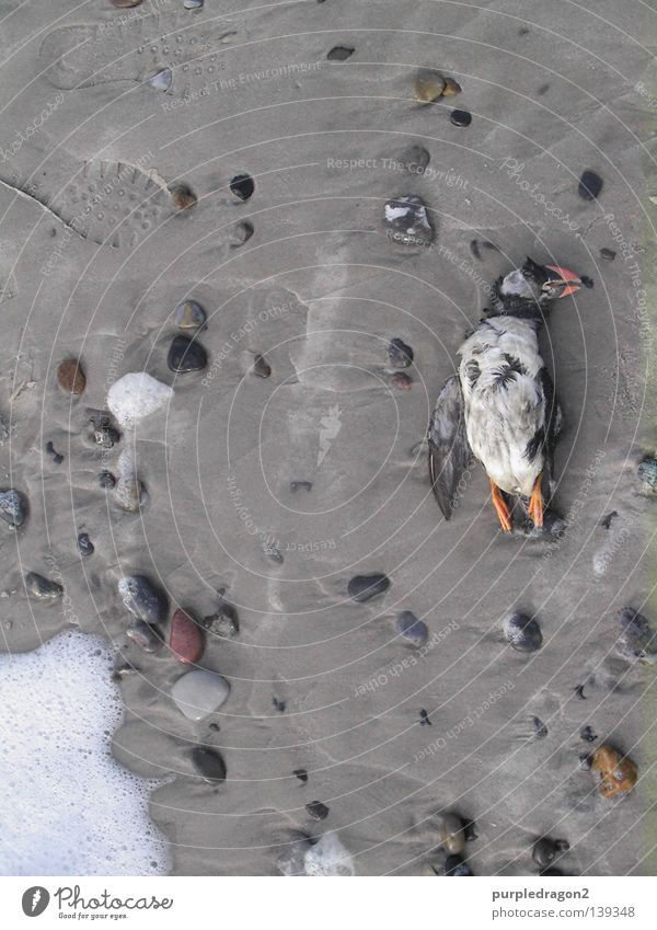 Ocean Beach Sadness Death Stone Bird Sand Feather Grief Iceland Speech Foam White crest Denmark Scandinavia Resurrection