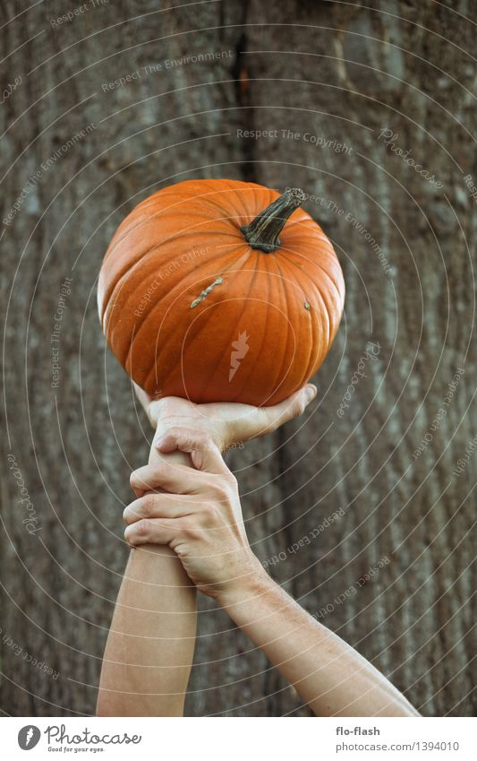 KÜR V Food Vegetable Pumpkin Elegant Style Feasts & Celebrations Thanksgiving Hallowe'en Cook Autumn Plant Agricultural crop To hold on Carrying Orange To enjoy