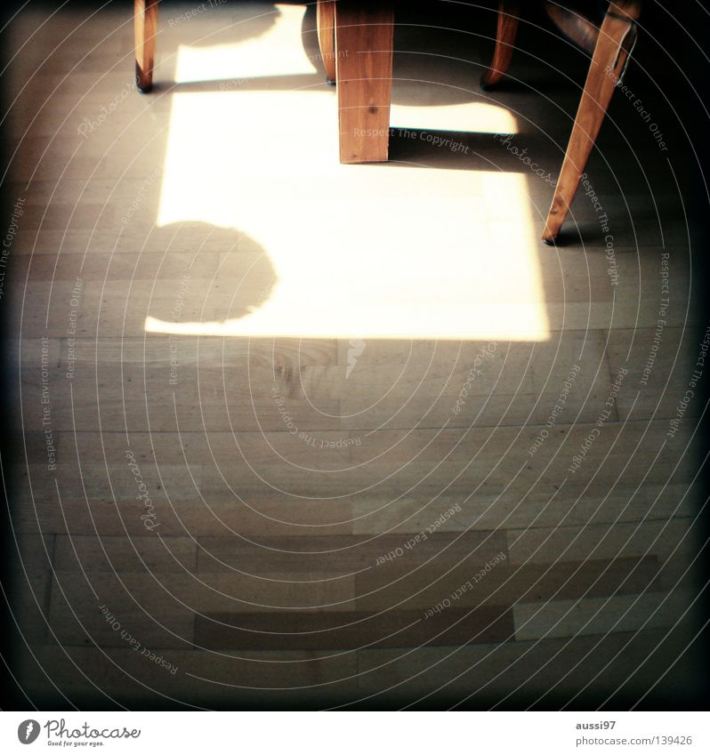 Relaxation Bright Sleep Table Kitchen Gastronomy Concentrate Analog Drape Hallway Depth of field Structures and shapes Grid Parquet floor Wooden floor