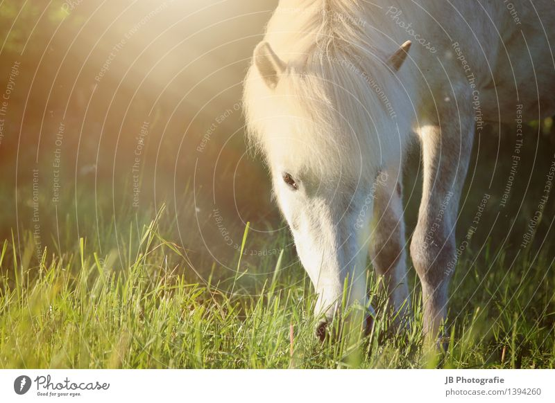 Green Summer Relaxation Animal Yellow Warmth Meadow Grass Idyll Beautiful weather Horse Pasture Pelt Passion Pet To feed