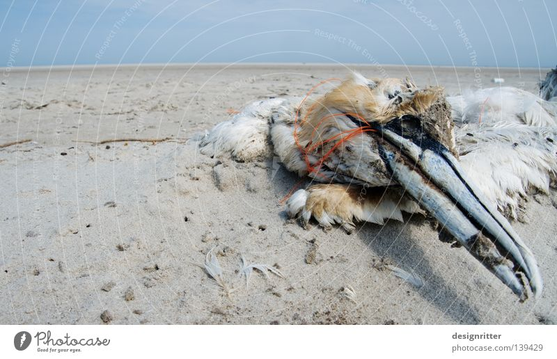 Water Vacation & Travel Ocean Summer Beach Animal Environment Death Coast Sand Lake Bird Dirty Island Rope Transience