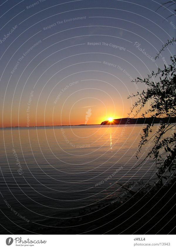Rügen sunset Sunset Tree Ocean Water Baltic Sea Evening Reflection Sky Twig