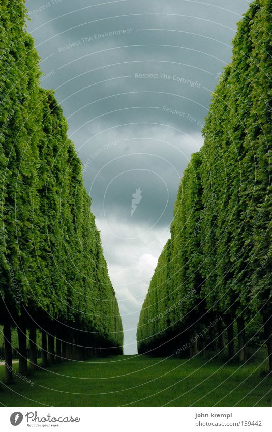 shining Green Hedge Bushes Tree Vanishing point Horizon Clouds Bad weather Paris Versailles France Geometry Orderliness Historic Garden Park Branch Sky