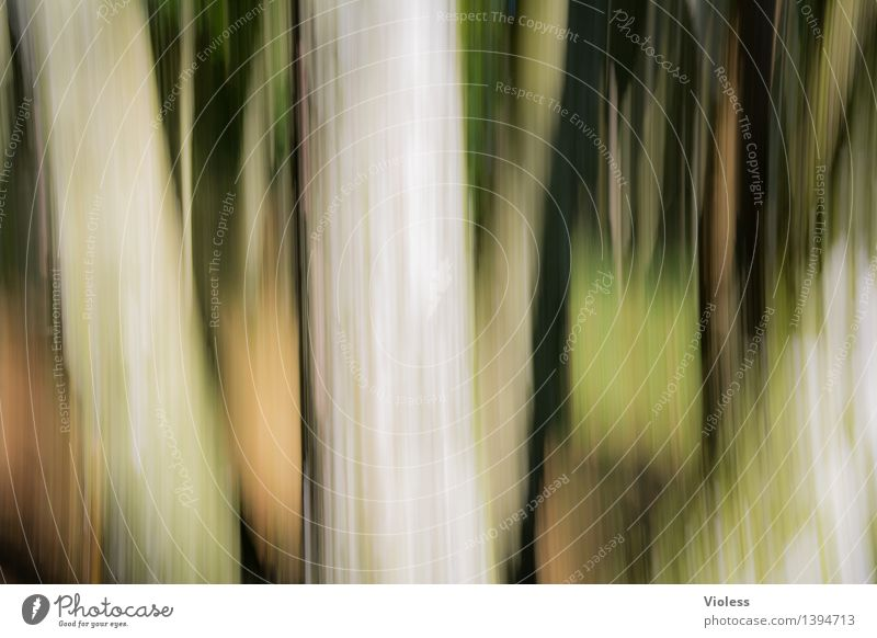 How to get into the forest.................................................. Forest Tree trunk Blur Abstract Green Deciduous tree