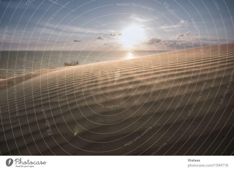 Sun Ocean Beach Sand Wind Gale North Sea Dune Beach dune Denmark Wanderdüne Rubjerg Knude