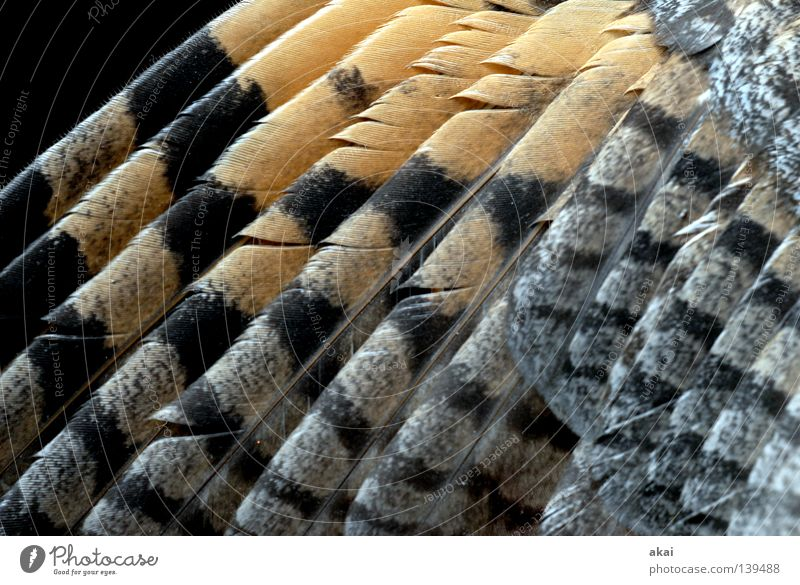 kestrel Falcon Kestrel Bird of prey Animal Hunter Feed To feed Watchfulness Testing & Control Hunting Fear Air Nosedive Panic Beautiful hawk Wing Feather