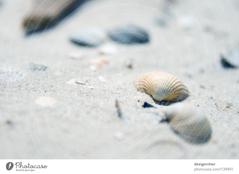 Nature Beautiful Ocean Beach Vacation & Travel Animal Life Playing Death Lake Sand Fish Leisure and hobbies Jewellery Collection Mussel