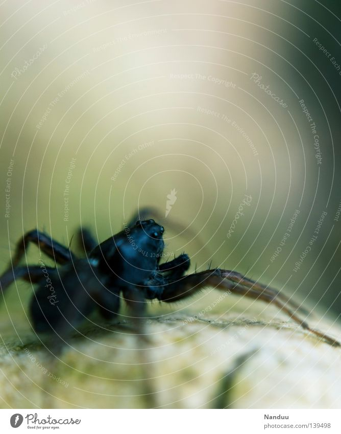 Animal Coast Sit Threat Insect Creepy Living thing 8 Spider Environmental protection Crawl Endangered species
