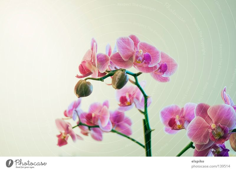 Beautiful Flower Plant Emotions Blossom Bright Pink Orchid