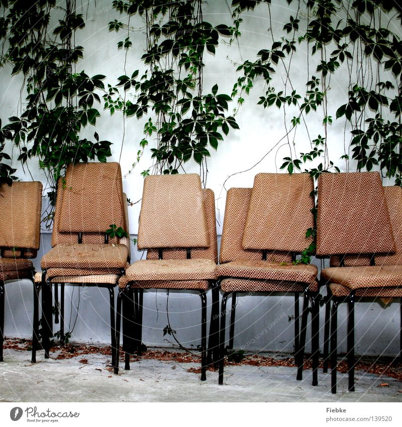box seats Chair Stage Wall (building) White Old Creeper Plant Leaf Green Bolster Yellowed Bleached Day Furniture Vine Virginia Creeper Beige Stack Shows