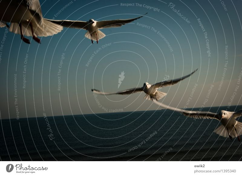 Nature Water Landscape Animal Dark Environment Life Happy Flying Moody Together Horizon Elegant Wing Fantastic Threat