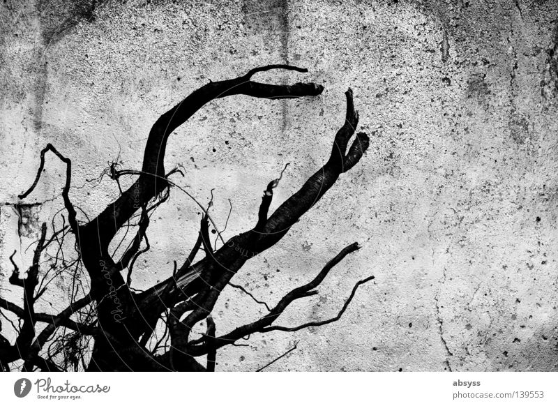 White Summer Black Loneliness Wall (building) Wood Gray Stone Concrete Desert Branch Derelict Dry Crack & Rip & Tear Forget Infertile