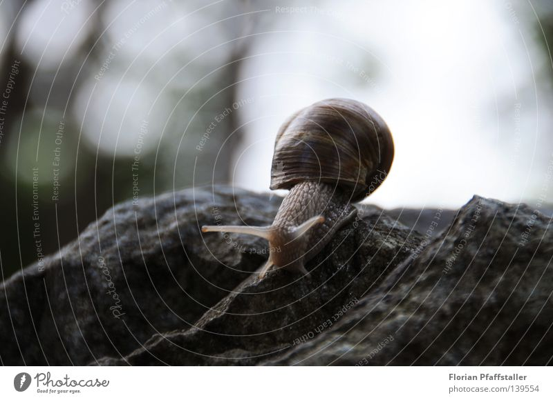 travel with house Snail shell House (Residential Structure) Blur Slowly Slow motion Animal Slimy Small Effort Deep Corner Austria Nature Blind Weight