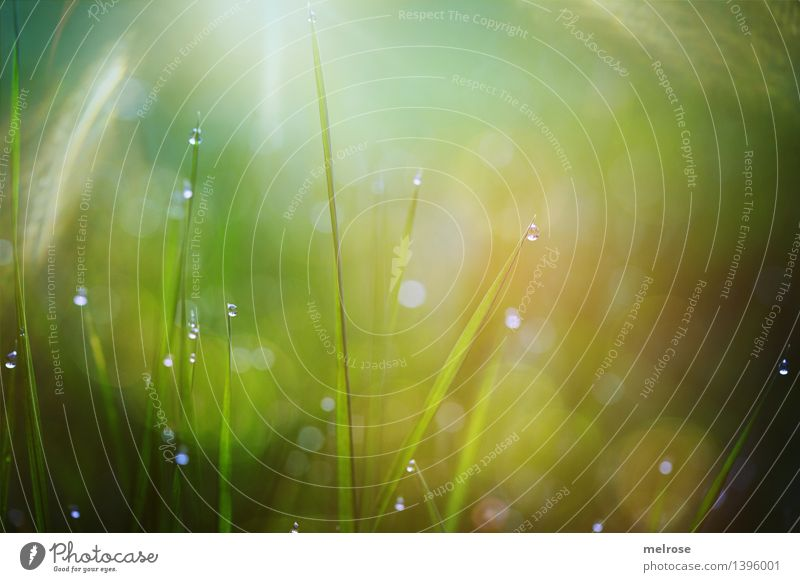 morning dew Style Design Nature Drops of water Autumn Beautiful weather Grass blades of grass Meadow Dew dew drops bokeh Fairy lights Glittering Illuminate
