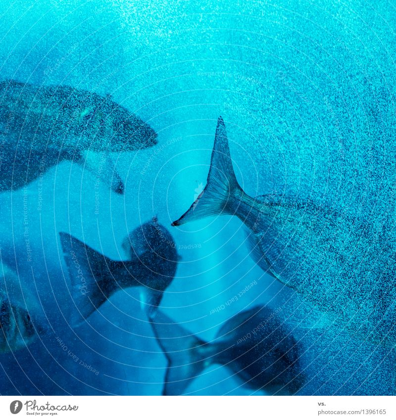 group trip Water Coast Ocean River Animal Wild animal Fish Flock Feeding Hunting Vacation & Travel Swimming & Bathing Fluid Fresh Healthy Wet Black Turquoise