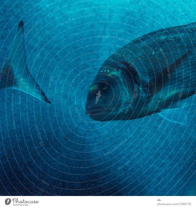 fellow swimmer Water Waves Coast Lakeside River bank Bay Ocean Pond Wild animal Fish Aquarium 1 Animal Flock Eating Swimming & Bathing Fresh Healthy Wet Slimy