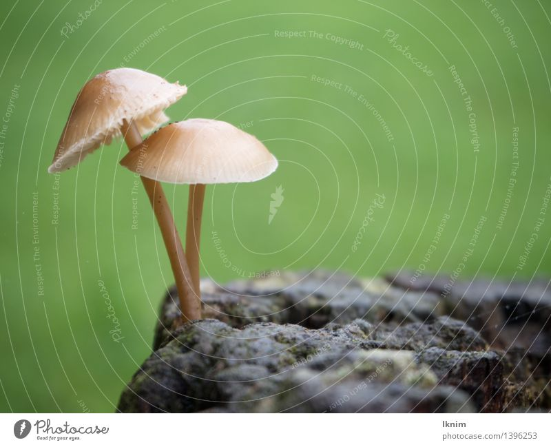 lonely love Nature Plant Autumn Mushroom forest mushroom Love Wet Green Loyalty Environment Autumnal mushroom world Small Together Embrace Tree fungus