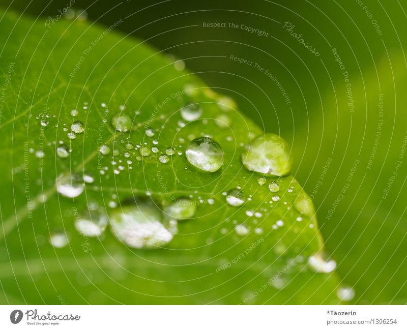 water supply Nature Plant Drops of water Autumn Bad weather Rain Flower Leaf Fresh Wet Natural Beautiful Green Colour photo Subdued colour Exterior shot