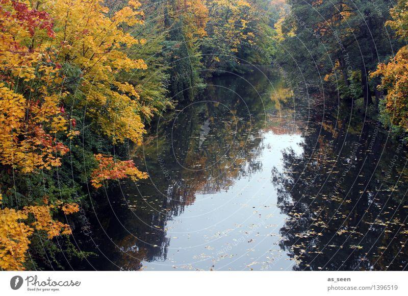 Autumn at the river Wellness Harmonious Senses Calm Meditation Environment Nature Landscape Water Tree Autumn leaves Deciduous tree Park Forest Lake River