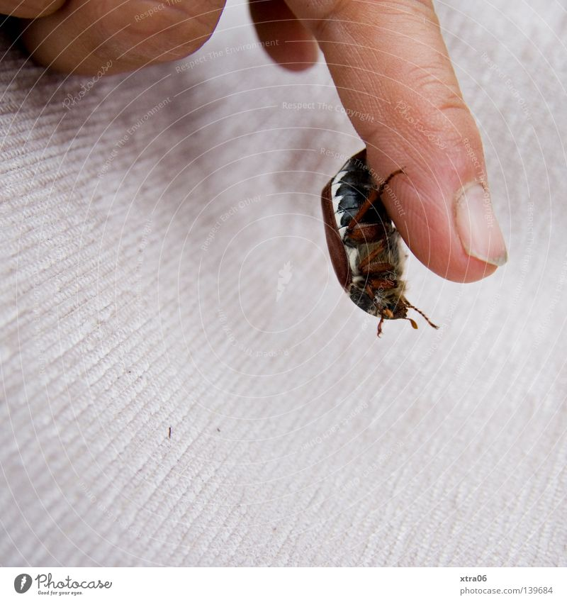 Hand Fingers Insect To fall Hang Beetle Fingernail May bug