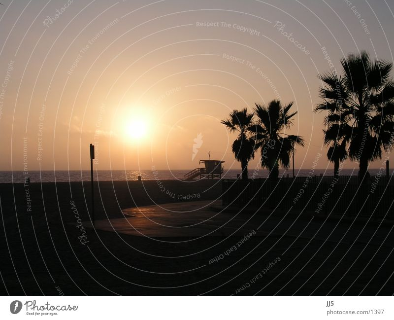 venice beach Beach California Sunset Palm tree Water Evening sun Sunlight Silhouette Pacific Ocean Pacific beach Palm beach Bay watch Copy Space top