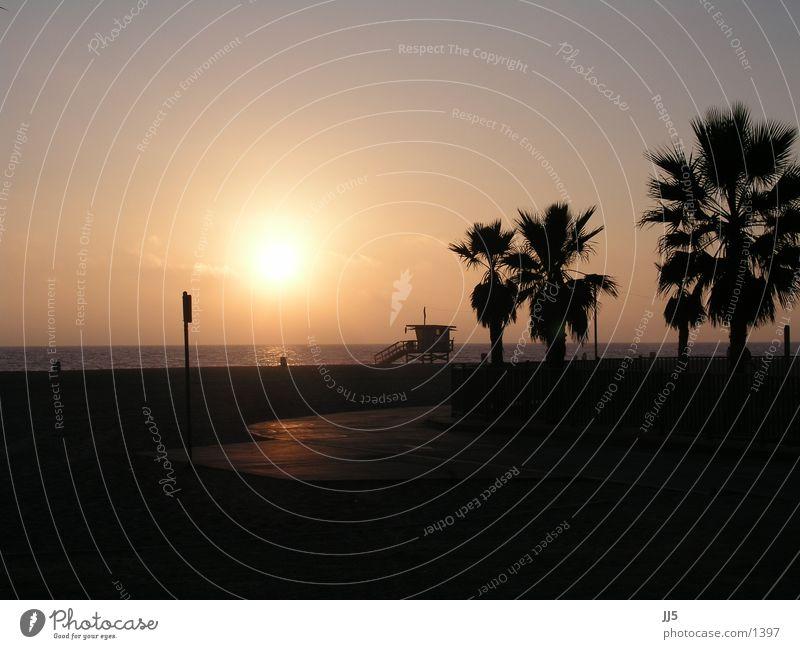 Water Beach Horizon Palm tree Cliche California Pacific Ocean Characteristic Tree Evening sun Bay watch Palm beach Pacific beach